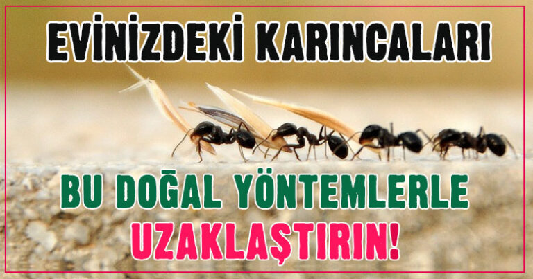 Evinizdeki karıncalardan bu doğal yöntemlerle kurtulun!