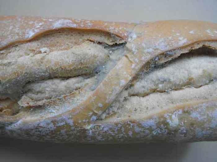 Kuflu Ekmek Yemek Zararlimi
